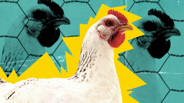 Morgan Spurlock Is Back, With A Vow To Fight Big Chicken