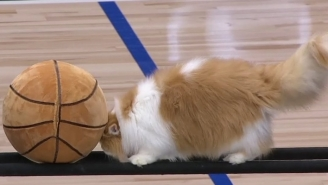 The Mavs Had The Best New Halftime Show In The NBA Featuring A Collection Of Multi-Talented Cats