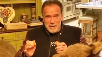 Arnold Schwarzenegger's Coronavirus PSA Stars A Donkey And A Miniature Pony