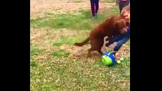 This Dog Tackling A Child At An Easter Egg Hunt Is Perfect Football Teaching Tape