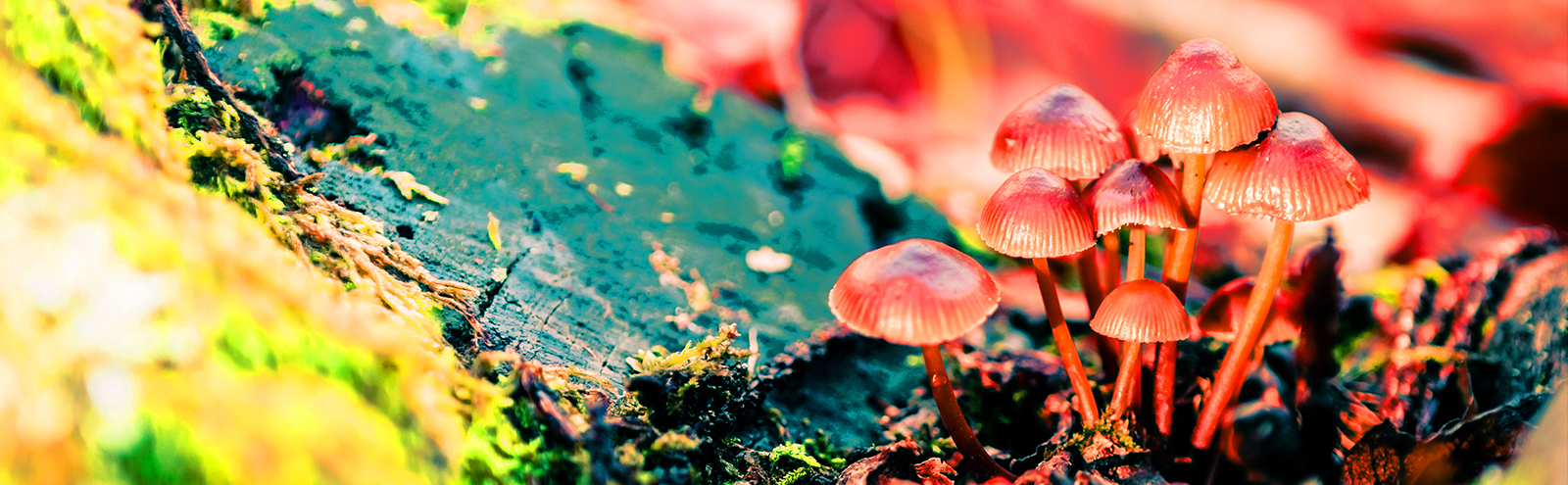mushrooms-tfeat-uproxx.jpg