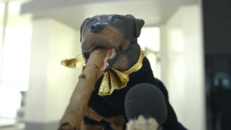 Triumph The Insult Comic Dog's Focus Group Of Trump Supporters Is Hilarious… And Terrifying