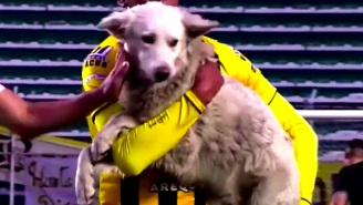 A Very Good Dog Interrupted A Soccer Match And Got Some Magnificent Belly Rubs