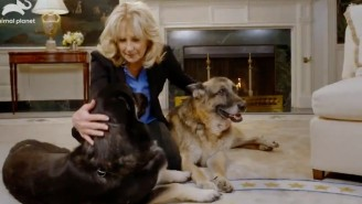 Dr. Jill Biden Used The Return Of Dogs To The White House As An Excuse To Share A Mask PSA