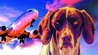 The Rules Have Changed! Here's Every Airline's Emotional Support Animals Policy