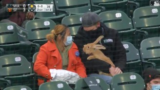 A San Francisco Giants Fan Brought Their Very Large Therapy Bunny To A Game