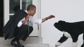 Barack Obama Shared A Moving Tribute To The Family's Dog Bo After He Passed Away