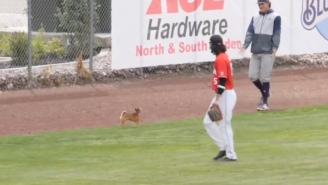 Dog Goes On Field During College Baseball Game, Was Extremely Cute, Eventually Left