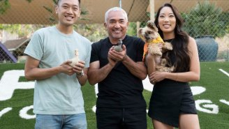 Dog Whisperer Cesar Millan Is Back With A New NatGeo Show: 'Better Human Better Dog'