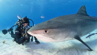 What's On Tonight: Eli Roth's 'FIN' Gets Deadly Serious For Shark Week, And It's 'Loki' Season Finale Time