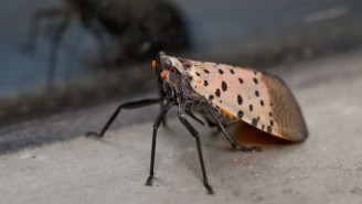 Experts Gave The Okay To Kill Invasive Lanternflies And The Internet Responded With Bug-Related Bloodlust