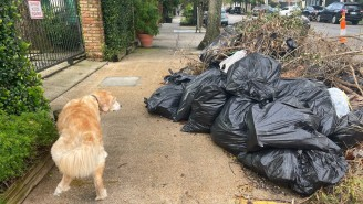 A New Orleans Man Has Been Arrested For Threatening To Kill The City's Mayor Over Trash Going Uncollected For Weeks Post-Hurricane Ida