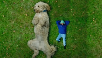 Aminé Kicks Back With A Giant Poodle In The 'Charmander' Video