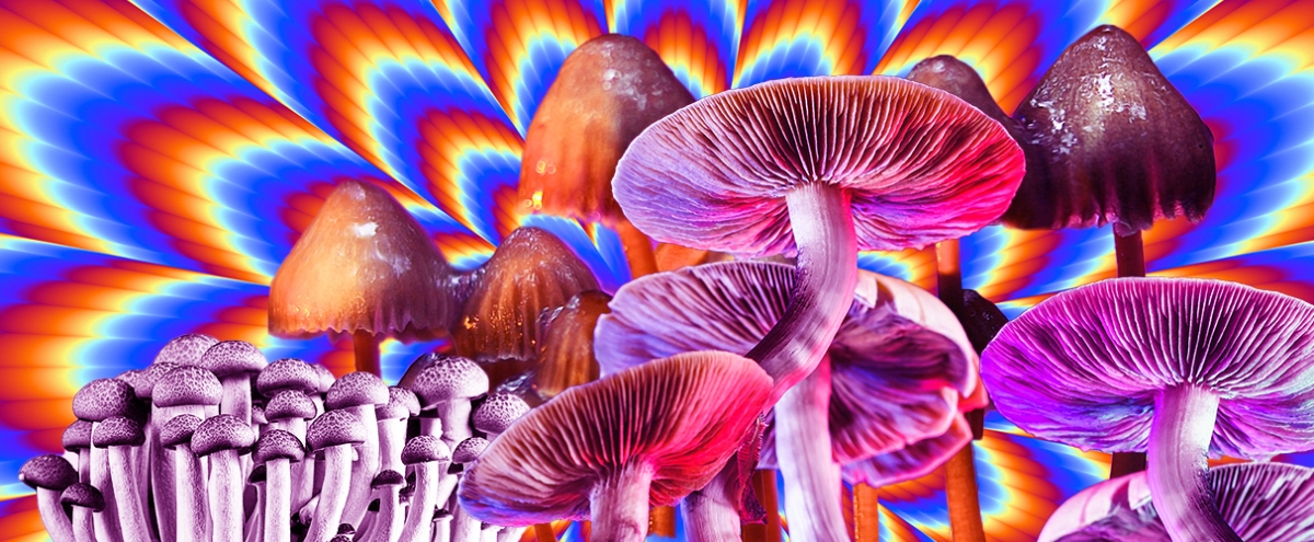 A Conversation About Psilocybin And The Mushroom Boom With The Team Behind 'Fantastic Fungi'